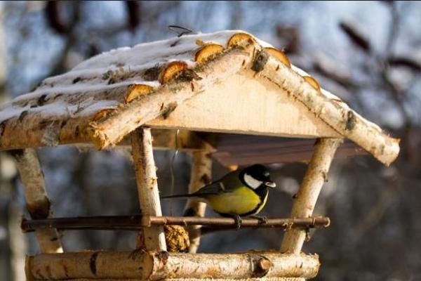 Кормушки птицам