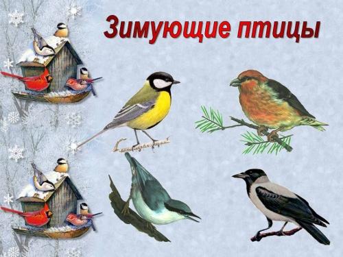 Картинки зимующие